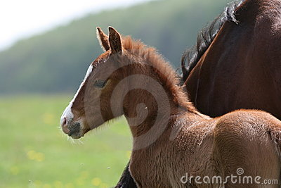 Foal in countryside