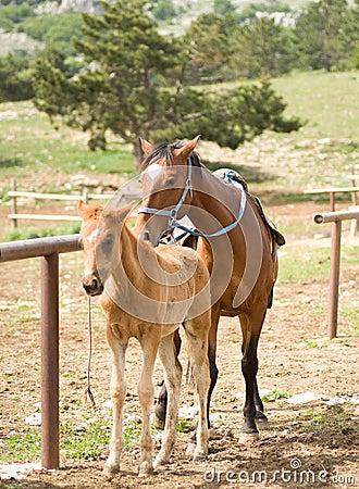 Foal Horse
