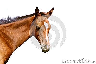 Foal isolato