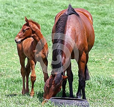 Foal looks left