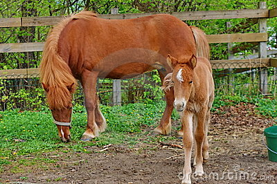 Foal with mother.