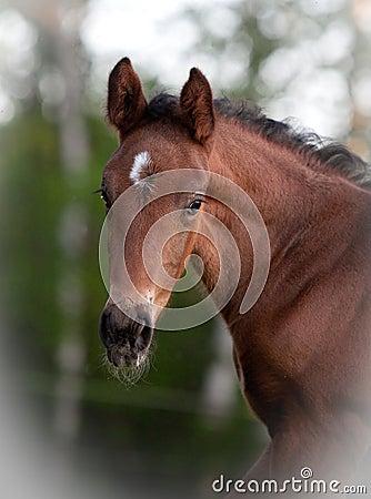 Free Foal Portrait Stock Photos - 14561813