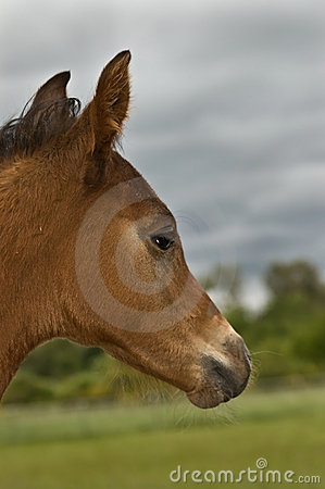 Foal in profile