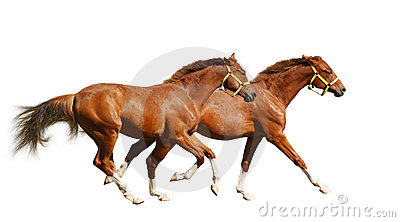 Foals sorrel δύο καλπασμού