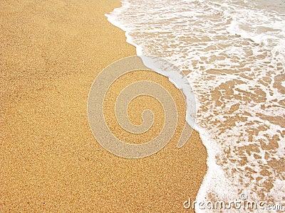 Foamy sea shore