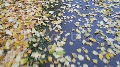 Foco seletivo Caminhe ao longo de uma estrada de pedestres com folhas amarelas caídas Blurry shot Movimento rápido em movimento H vídeos de arquivo