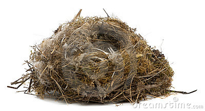 Focus stacking of a Nest of tit