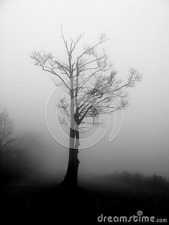 Free Fog Royalty Free Stock Image - 6880976