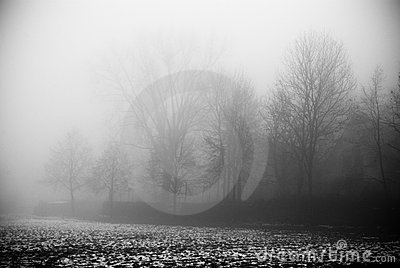 The fog and dark forest