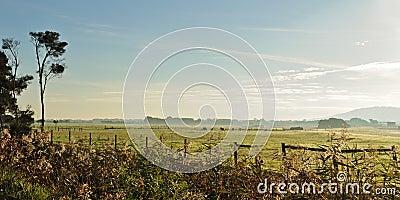 Fog and dew on farmland