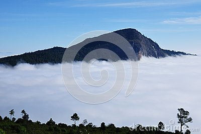Fog at Doi Hua-sua