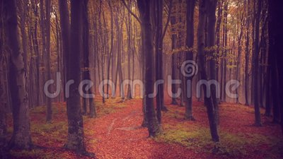 Fog and falling leaves in a forest during autumn stock footage