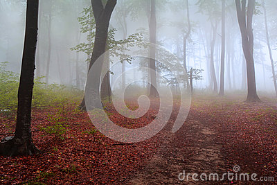 Fog in the forest during autumn