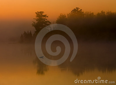 Fog, Forest, and Water at Sunrise