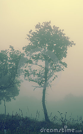 Free Fog In Chianti Royalty Free Stock Image - 2795396