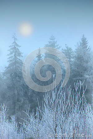 Free Fog In Winter Forest Royalty Free Stock Photo - 29319305