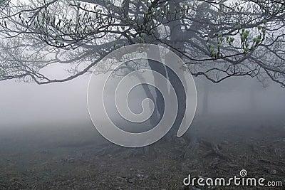Fog s tree