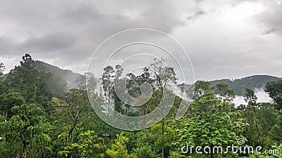 Fog sprids över regnskogstiden. arkivfilmer