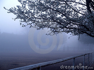 Fog and Spring Blooms