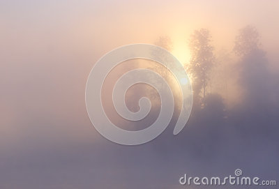 Fog Sunrise Trees