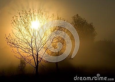 Fog, tree and sun.