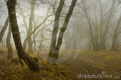Fog in wood