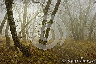 Fog in wood