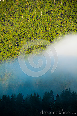 Fog in a wood of Dolomites mountains, Italy