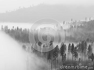 Fog in Yosemite Valley