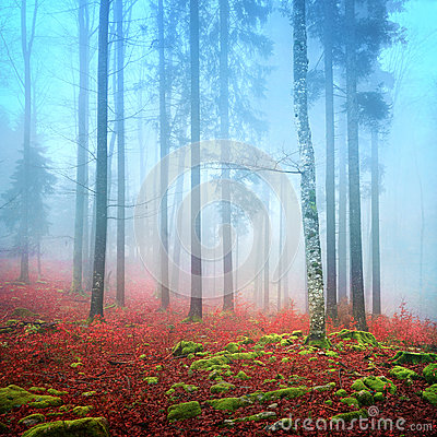 Free Foggy Autumn Forest Royalty Free Stock Photo - 36202765