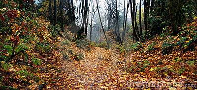 Foggy Autumn Forest Path
