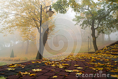 Foggy autumn in the park scenery