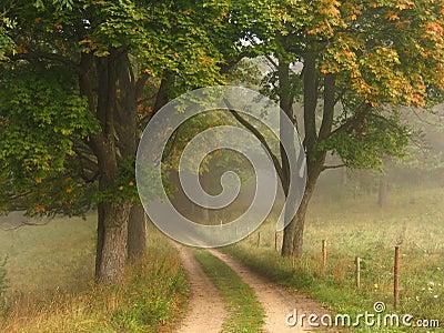 Foggy autumn road