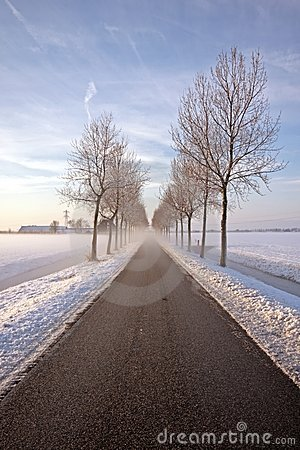 Foggy countryroad in wintertime