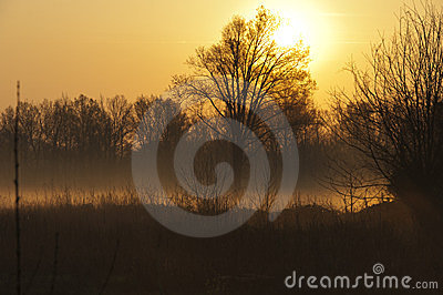 Foggy countryside sunset