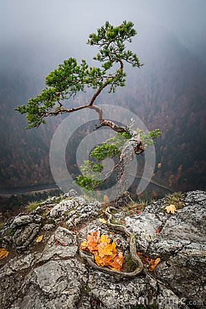 Free Foggy Dawn At Sokolica Peak In Pieniny Mountains In Autumn Royalty Free Stock Image - 103173696