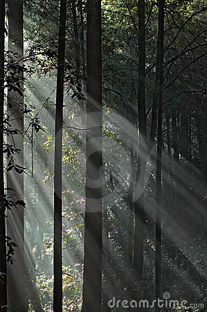 Foggy day in the forest