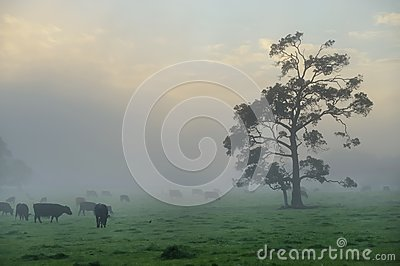Foggy farm