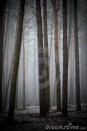 In the foggy forest