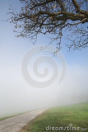 Foggy hillside