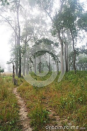 Foggy Jungle Trail