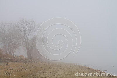 Foggy Lake Shoreline View