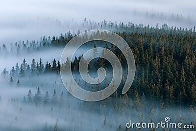 Foggy landscape. Foggy valley of Sumava national park. Detail of forest, Boubin mountain of Czech Republic. Stock Photo