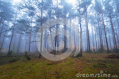 Foggy landscape in the forest
