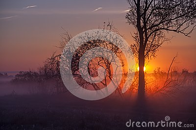 Foggy landscape with a tree silhouette