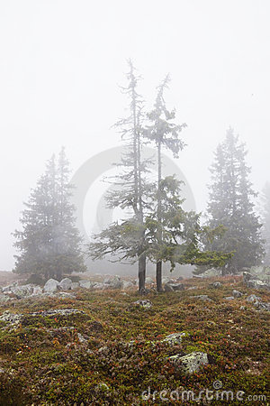 Foggy landscape with trees in fall