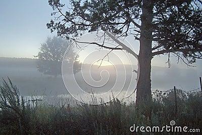 Foggy morning along Lost River.