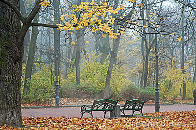 Foggy morning in autumn park