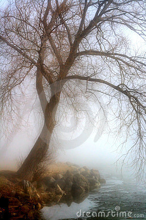 Foggy Morning By The Lake