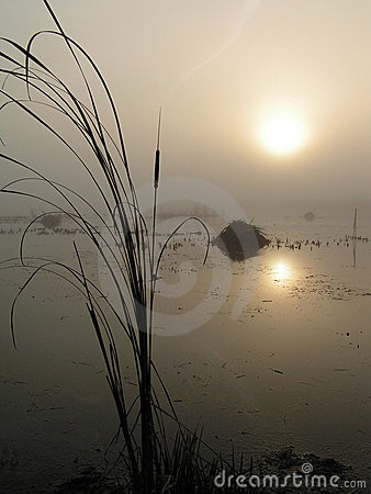 Free Foggy Morning On Tulchinskom Lake. Stock Images - 192544
